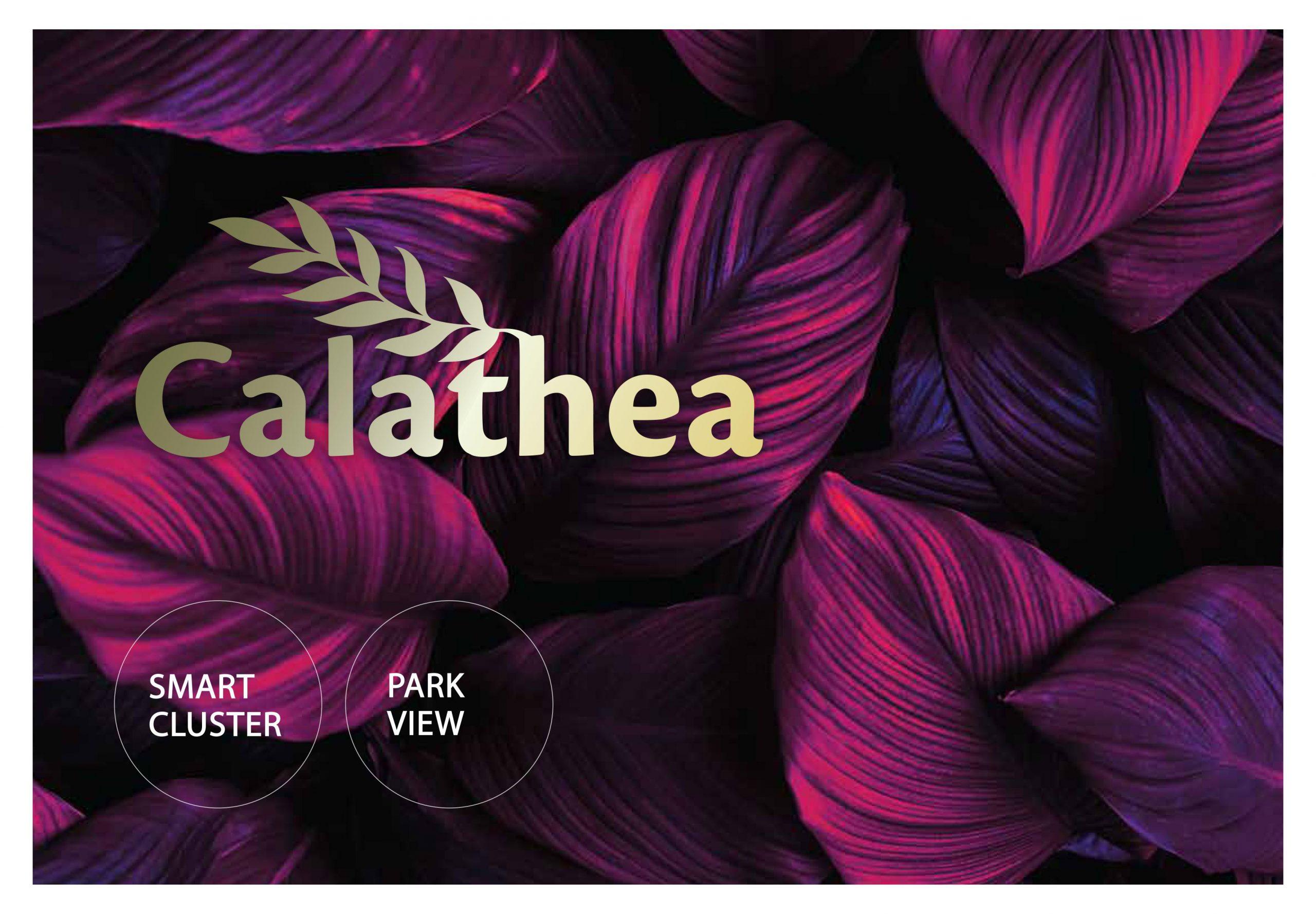 Calathea Citragrand Marketing Info : 08111229182